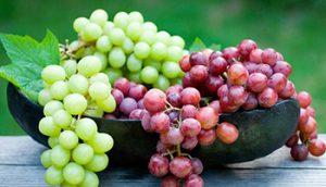 کود مایع مخصوص انگور